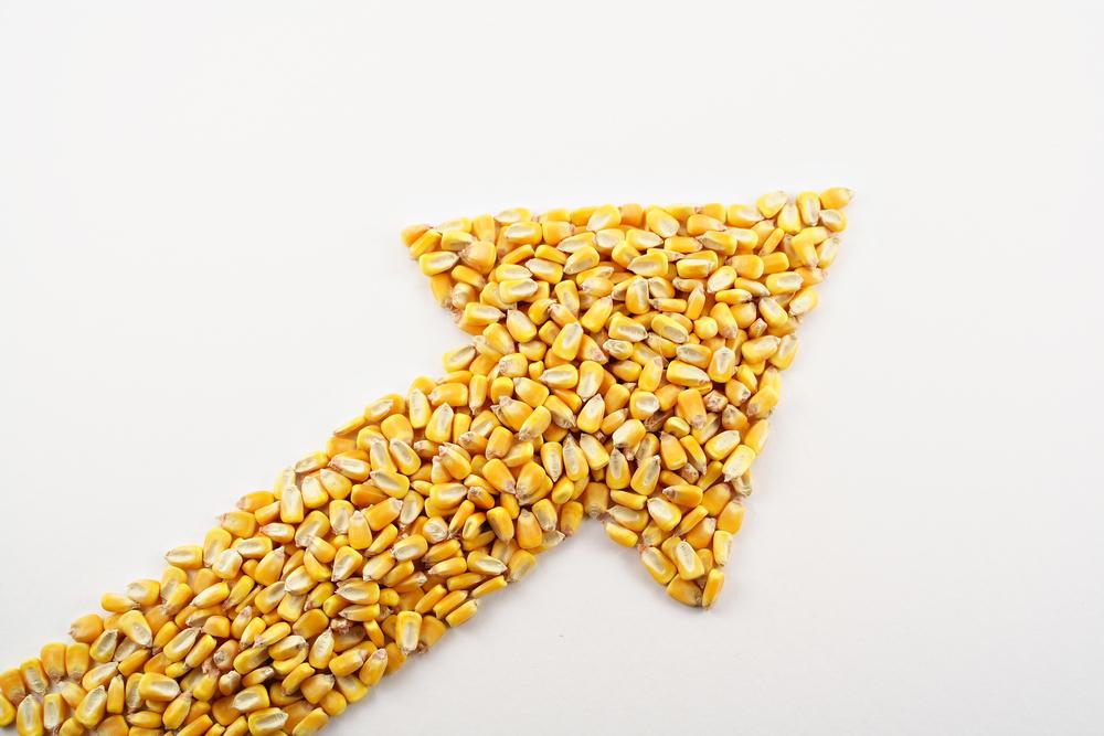 Queda de produção do milho na China pode causar valorização internacional, mas estoques americanos podem segurar alta. (Fonte: Shutterstock)