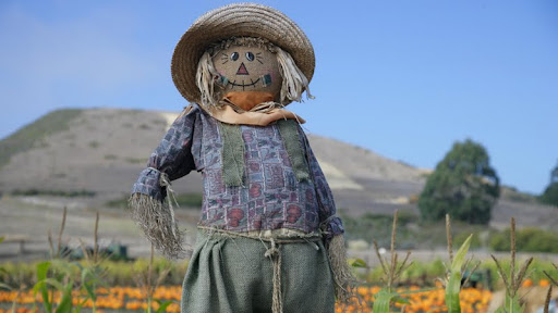 Pumpkin Patch Scarecrow.jpg