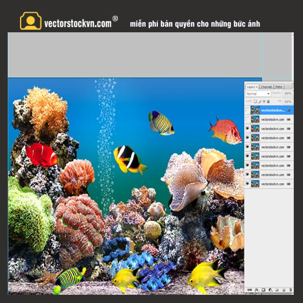 Cảnh quan 3D thế giới đại dương