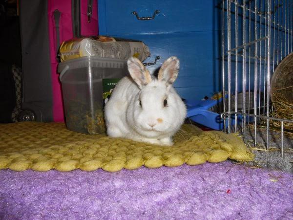 Mirana, lapine blanche-[adoptée] Mirana5-eaa9b