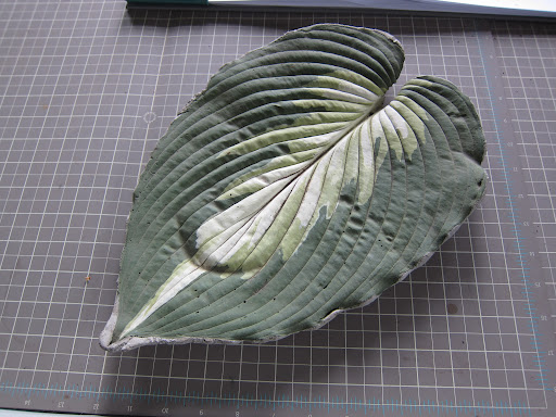 From the greenhouse desk: can you guess what this leaf is made of?