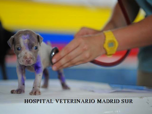 Hospital Veterinario Madrid Sur