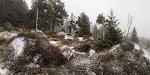 Auf dem Weg zum Bocken sehr schöne Impressionen mit Schnee und Nebel ...