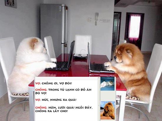 Ảnh chế 2 chú chó dùng máy tính
