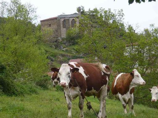 Troupeau de vaches à Peyrusse