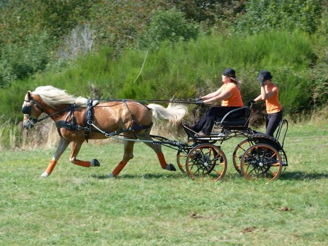 Fête du Haflinger les 16 et 17 aout 2013 a Ajoux (07) P1170179%2520%25281024x768%2529