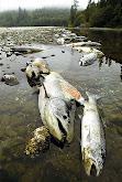 Impacto ambiental por contaminacion por aguas negras