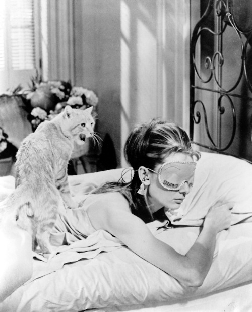 Audrey Hepburn and a cat