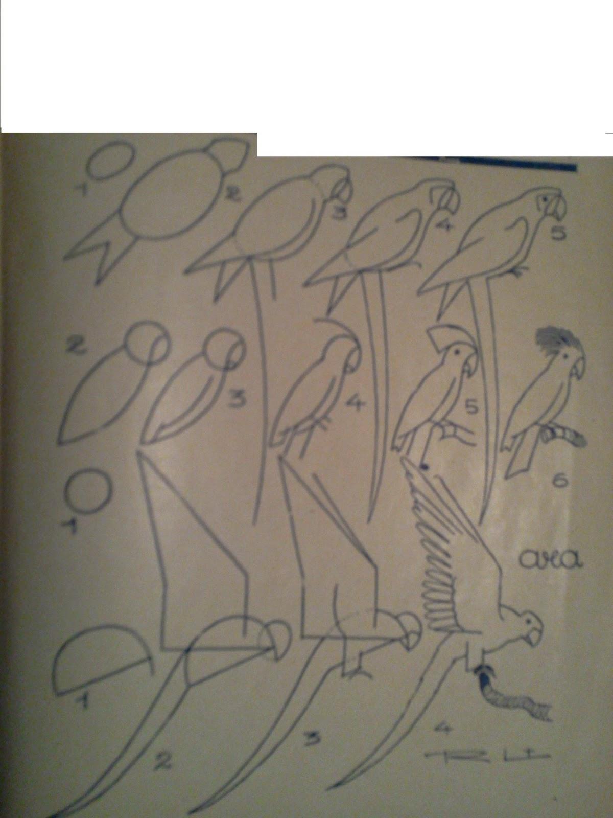 Dessins astuces pour debutants savoir dessiner un perroquet - Dessiner un perroquet ...