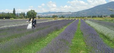 luoghi di interesse Assisi