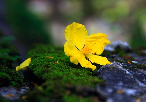 Thơ tiễn xuân, tạm biệt mùa Xuân