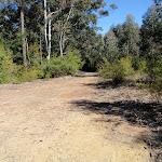 Pines plantation (62513)
