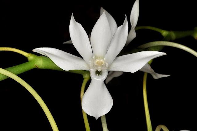 Растения из Тюмени. Краткий обзор DSC_0044