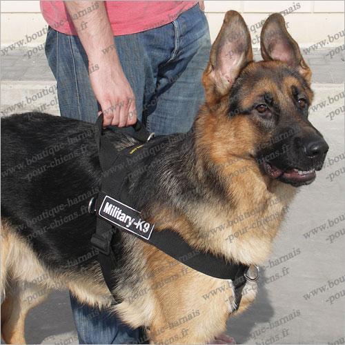 Boutique harnais pour chiens.: Harnais en nylon pour chien