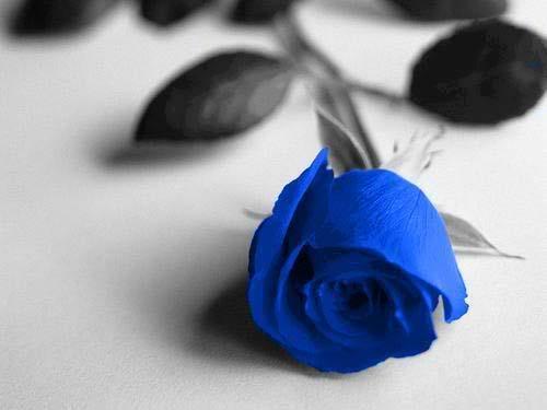 Cành hồng tuyệt đẹp