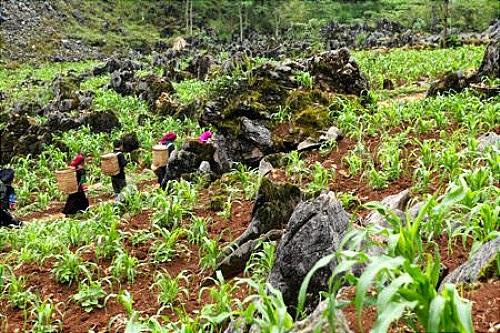 dac san ruou ngo o ha giang4 Thưởng thức đặc sản rượu ngô ở Hà Giang.