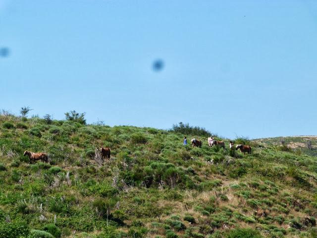 Fête du Haflinger les 16 et 17 aout 2013 a Ajoux (07) P1170016%2520%25281024x768%2529