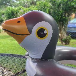 Tana Meyers