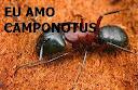 http://euamocamponotus.blogspot.com.br/