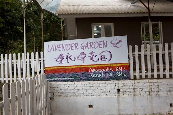bayaran masuk lavender garden
