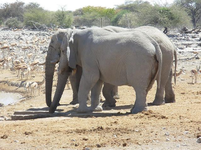 أفضل ما في أفريقيا  Best of Africa Namibia_180807115411