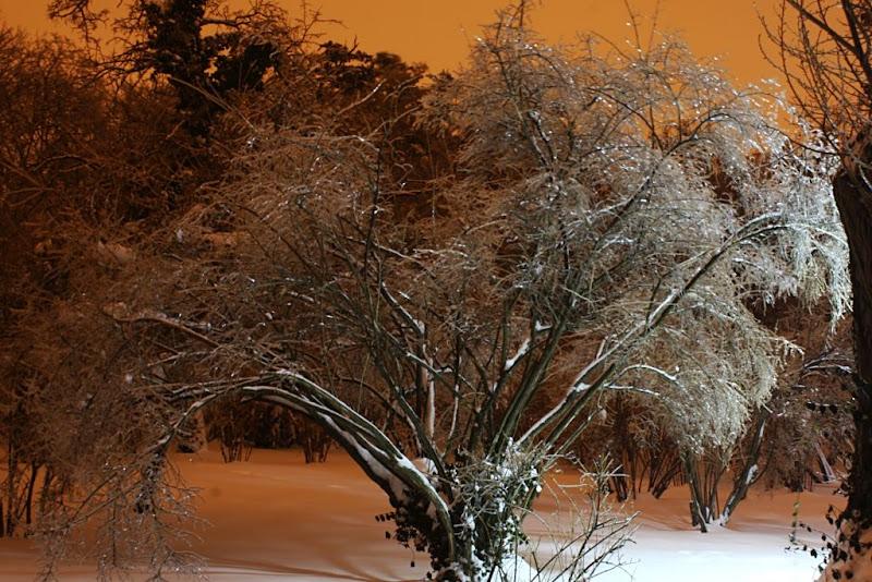 iarnă Bucuresti zapada fotografie noapte