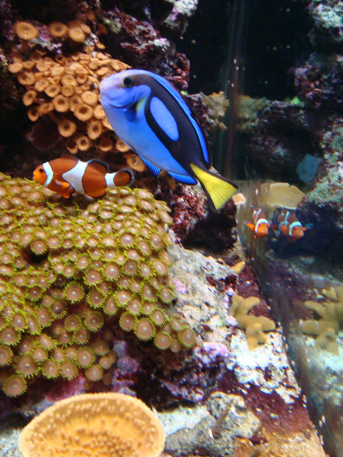 Paper Cut Screams By Cheryl The Mote Aquarium Sarasota Fl
