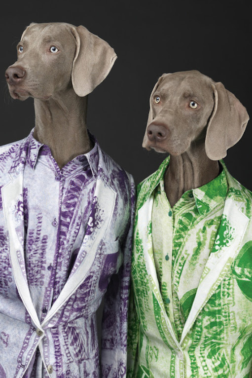 *Hat Dogs:美國攝影師William Wegman展現拿手獵狗展秀拍攝絕活! 3