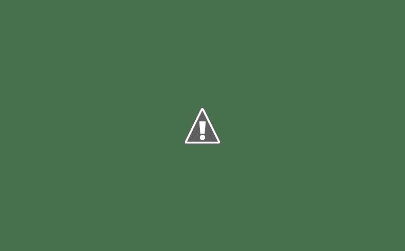صور عصافير فناكر بطربوش على رأسها