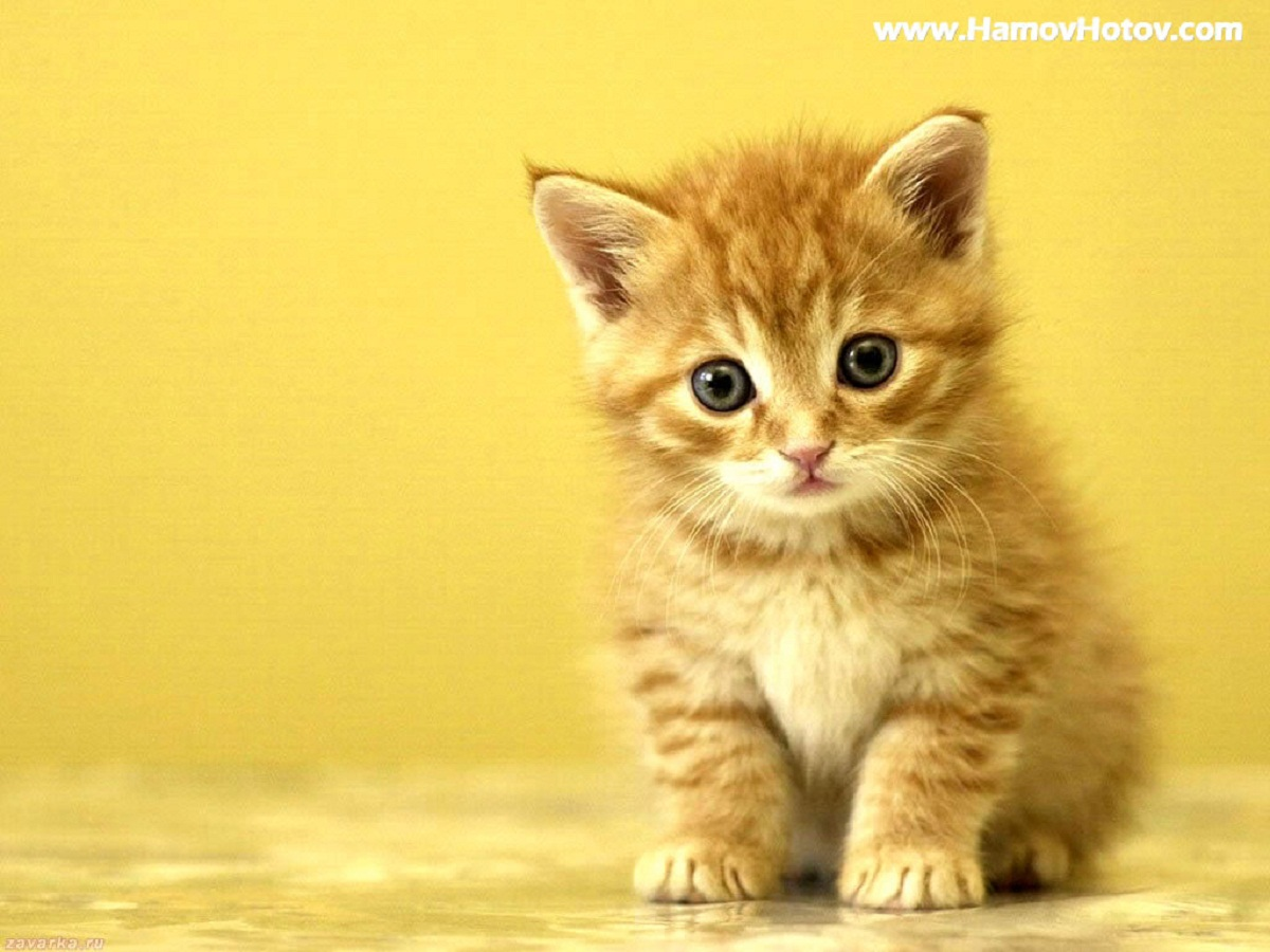 Videos De Gatos Fotos De Gatos Bonitos Y Videos De Gatos