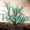 Tree Tuesday
