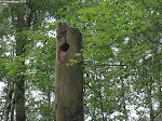 Von hier ging es ein Stück des markierten Nibelungensteiges entlang. Eine Wohnung eines Waldbewohners.