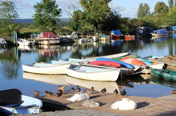 The River Frome at Wareham; Ducks on guard while the swans sleep!