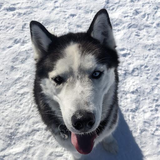Anthony Xu Photo 7