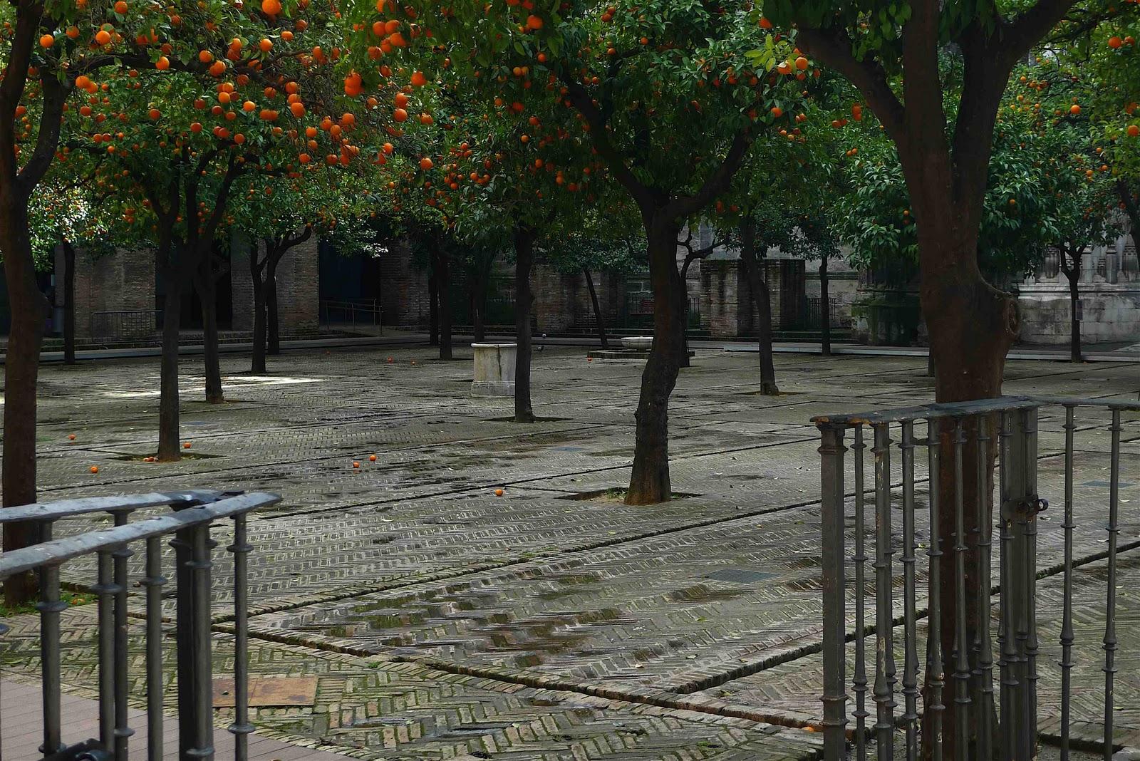 Jeffrey Bales World of Gardens: The Patio de los Naranjos ...