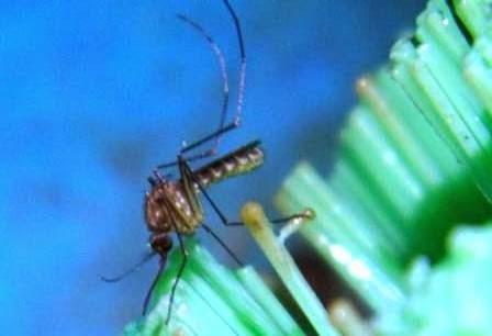 kasus penderita nyamuk DMD di ngawi