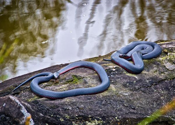 snake sunbake
