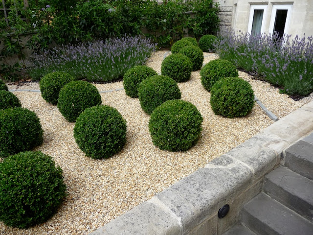 Front Garden design lavender topiary