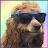 Steven Klein avatar image