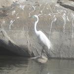 Rangana Thittu Bird Sanctuuary