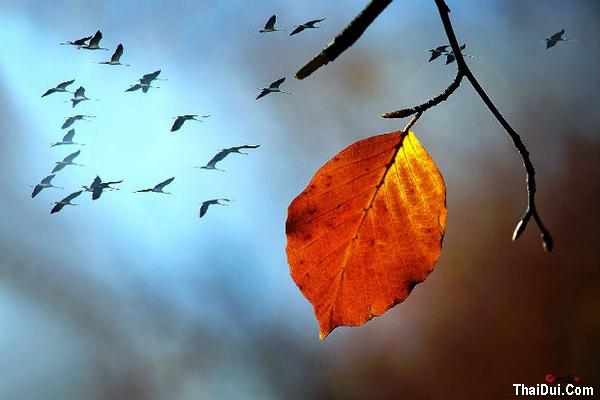 thơ lá rơi rụng mùa Thu