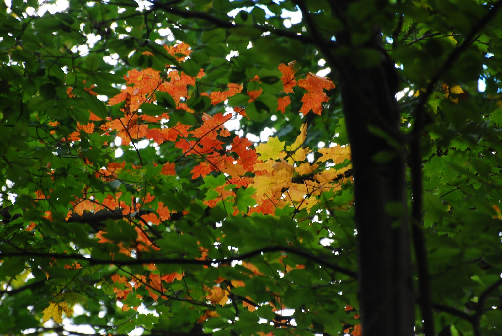 Mission Musings: FOUR SEASONS IN THE SACRED GROVE: Fall
