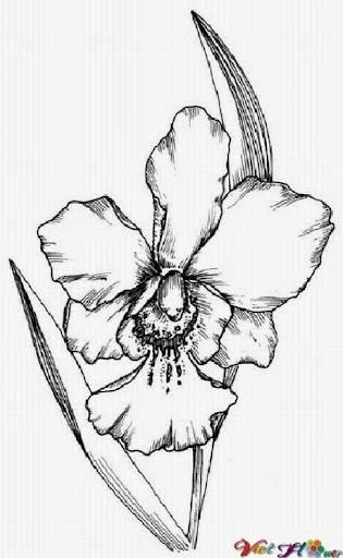 vẽ hoa lan bằng bút chì