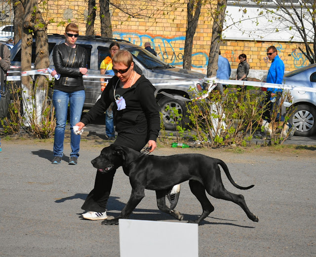 Кубок Аризоны-14(ПК)+ЧРКФ, Красноярск, 27 апреля 2014 DSC_5495