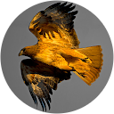 Bin Hawk