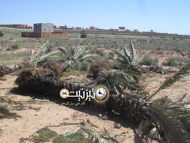 جريمة في حق البيئة والأشجار المثمرة بجماعة اثنين اكلو بتيزنيت / مرفق بصور