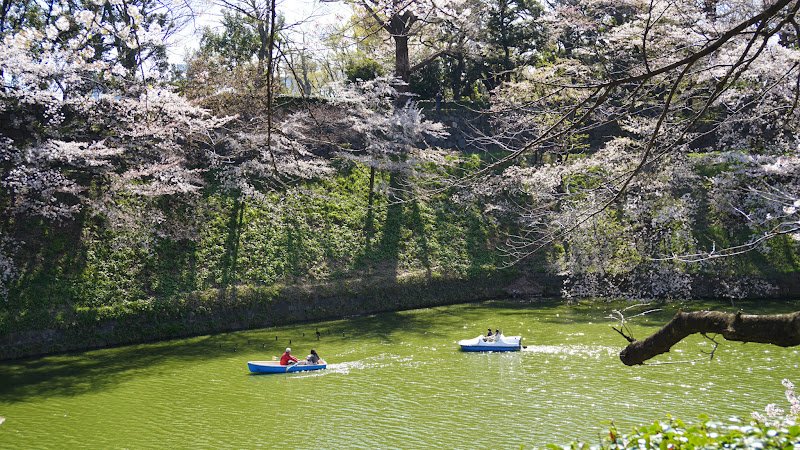 千鳥ヶ淵 桜 写真10