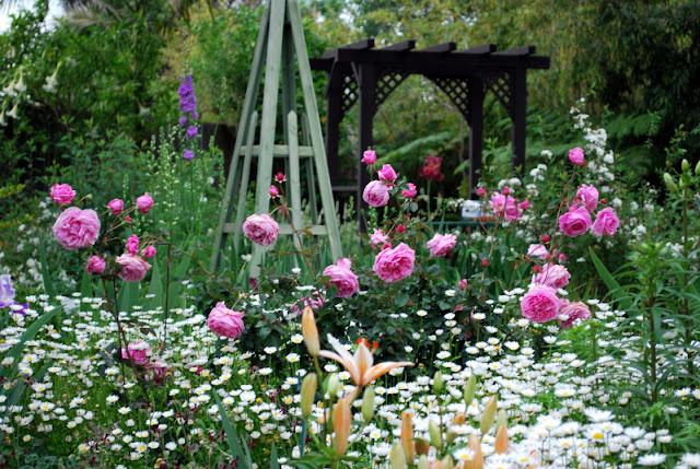 Hình ảnh minh họa việc dùng Hồng ngoại Bishop's Castle rose phối hợp với các loại hoa kiểng tạo cảnh quan sân vườn