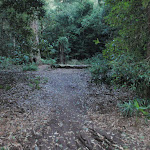 Palona Brook Picnic Area (173439)