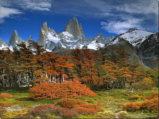 Mount Fitzroy and Beech Trees, Los Glaciares National Park, Patagonia, Argentina.jpg